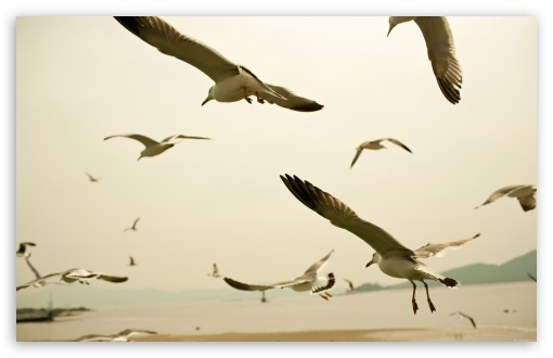 seagulls_flying_on_the_beach-t2